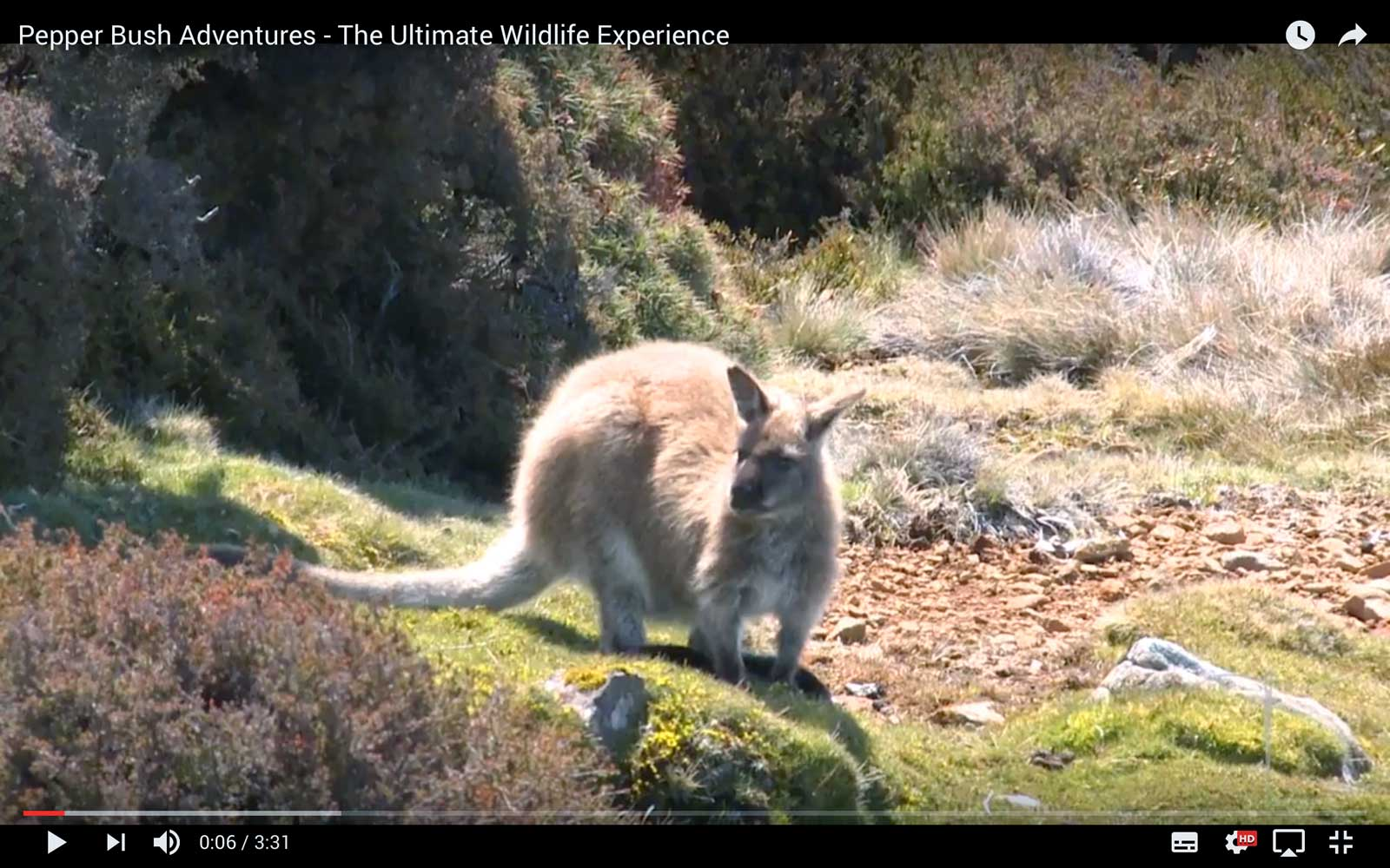 PLAY VIDEO - The Ultimate Wildlife Experience Tasmania